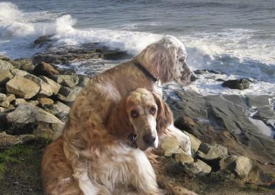 Dee's doggies